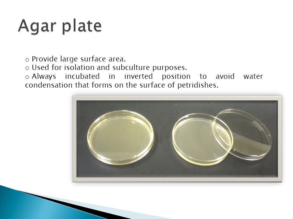 Agar plate Provide large surface area.