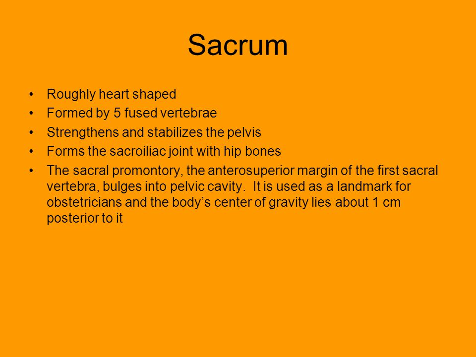 Sacrum Roughly heart shaped Formed by 5 fused vertebrae
