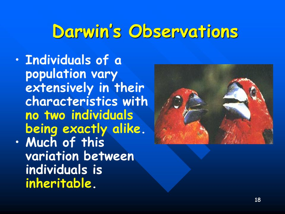 Darwin S Two Observations Natural Selection