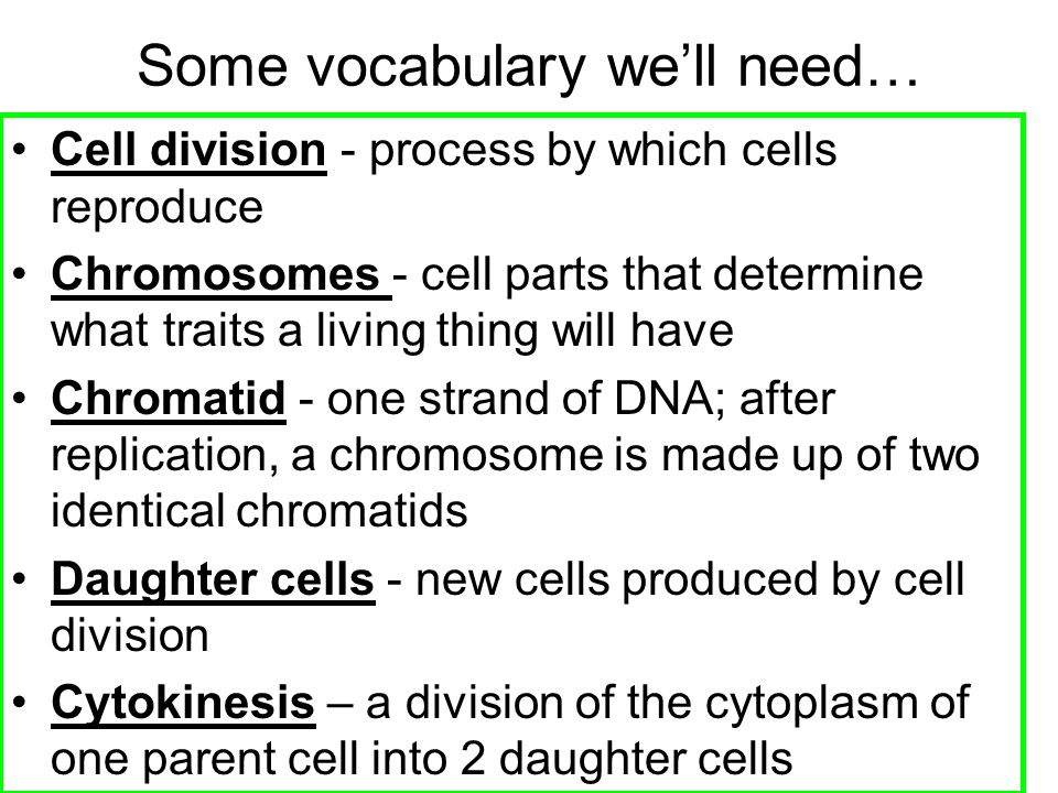 Aim: What are the stages of Mitosis? - ppt download