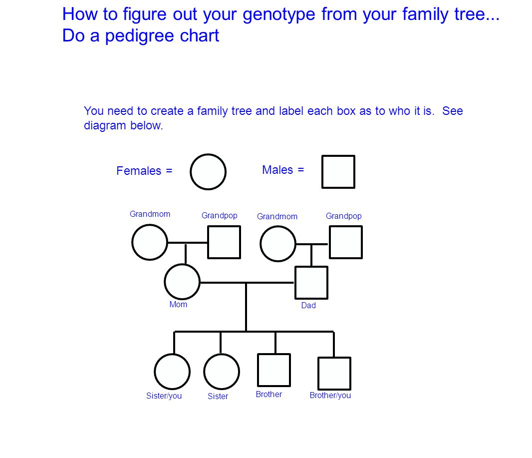 How to figure out your genotype from your family tree ppt video how to figure out your genotype from your family tree pooptronica Gallery