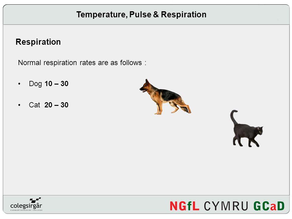 Temperature, Pulse & Respiration
