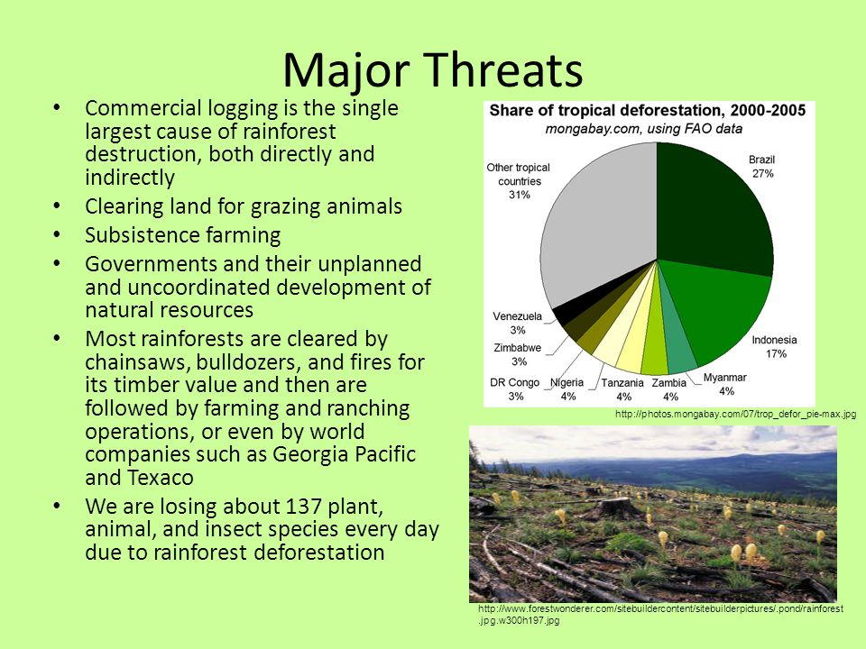 Two major causes of the destruction of the rainforest