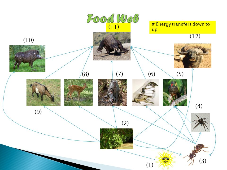 The gallery for --> Food Chain With Sun