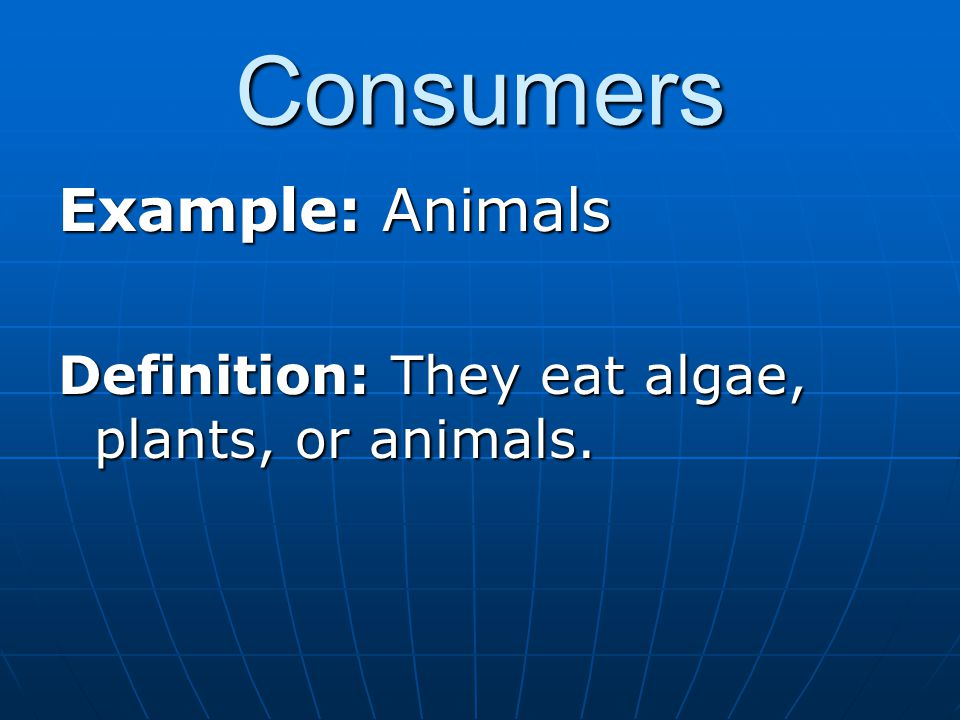 Consumers Example: Animals