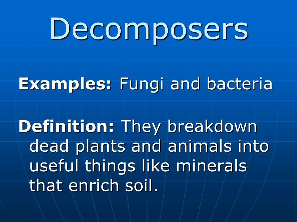 Decomposers Examples: Fungi and bacteria