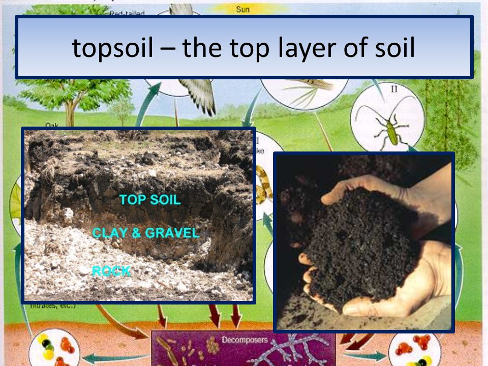 Chapter 5 lesson 1 interactions in an ecosystem ppt for Top layer of soil