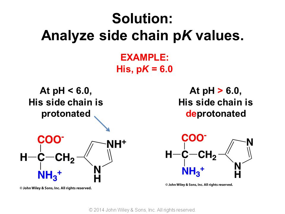 Proteins Are Polymers Of Amino Acids Ppt Video Online