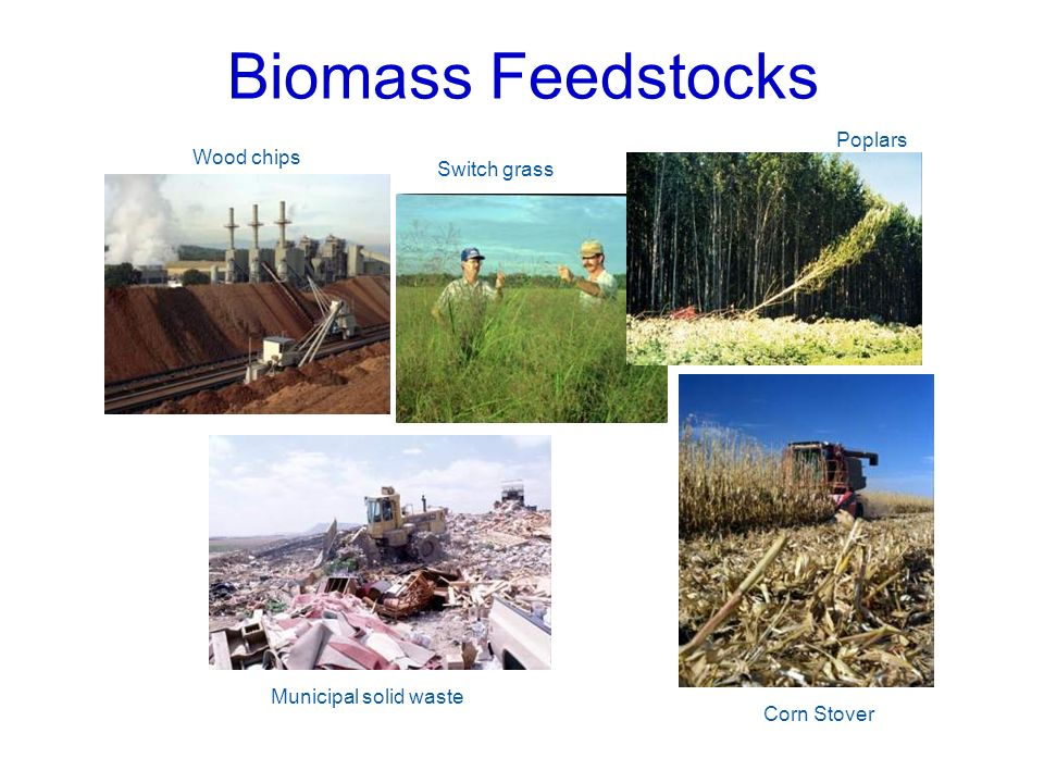 Biomass Feedstocks Poplars Wood chips Switch grass
