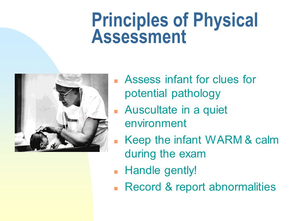 physical assessment of the newborn - ppt video online download, Skeleton