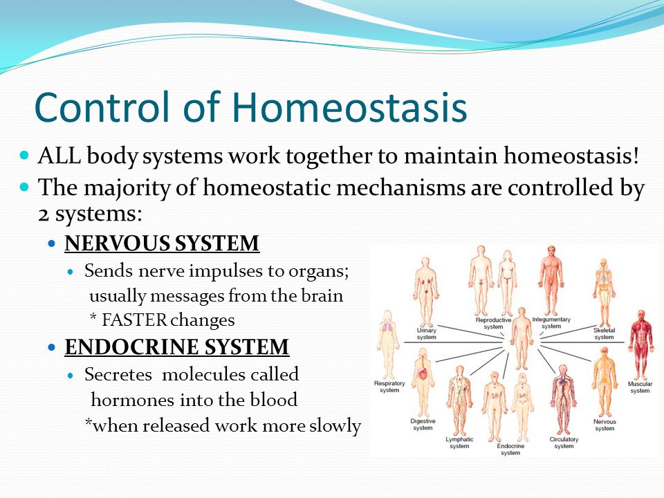 the basic mechanisms of homeostasis Learn how organisms maintain homeostasis a negative feedback loop has four basic parts homeostatic mechanisms function to maintain the body in a state of.