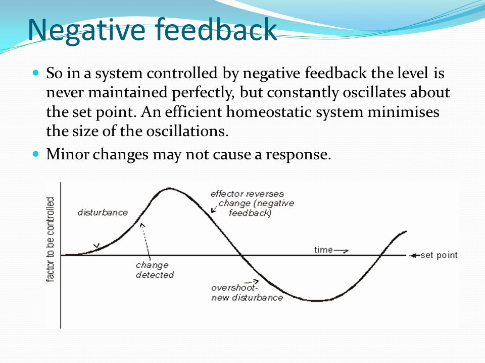 Homeostasis and negative feedback - ppt video online download