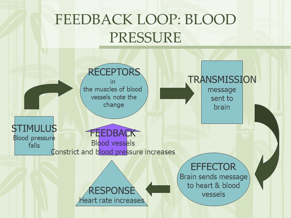 Negative Feedback Diagram Heart Rate Image collections ...