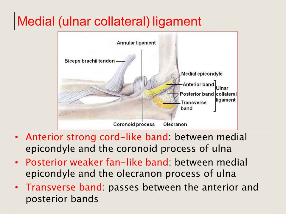 Ulnar Collateral Ligament Of Thumb Wikipedia Oukasfo