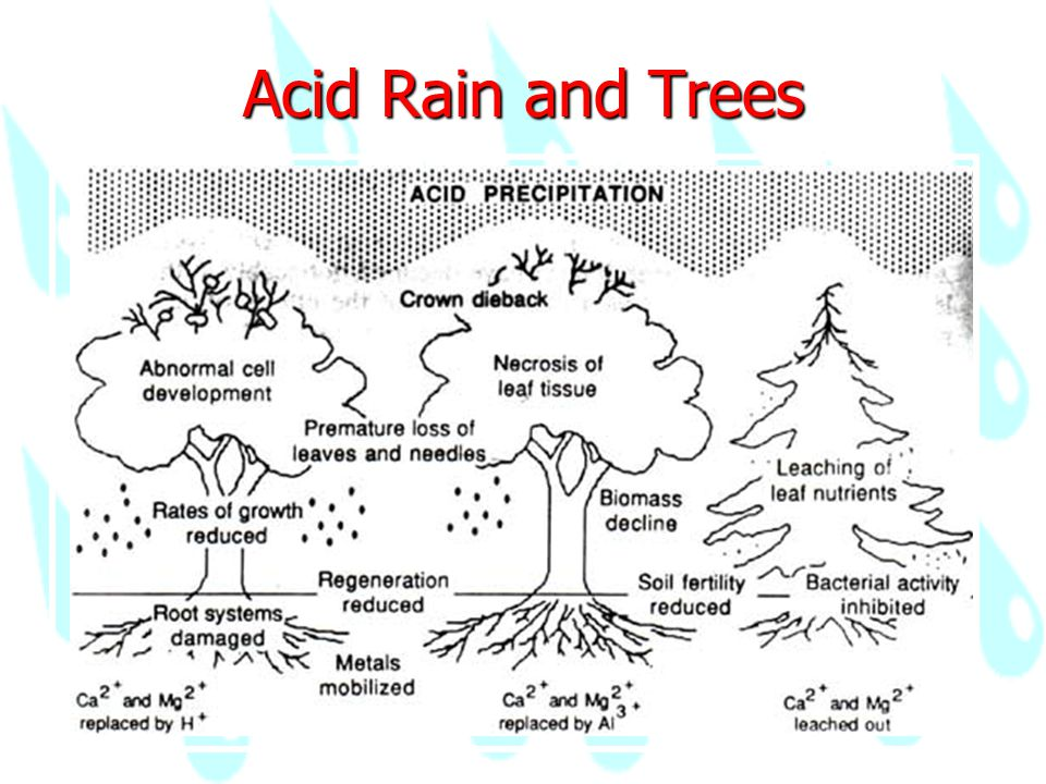 acid rain on our modern society We show a strong, highly significant, negative effect of acid rain on the predicted   that present evidence linking terrestrial bird population declines to acid rain   george, l & dobkins, d s (cooper ornithological society, seattle), in press.