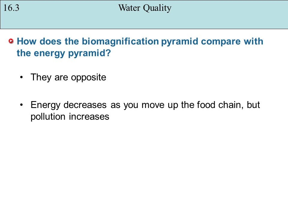 How does the biomagnification pyramid compare with the energy pyramid