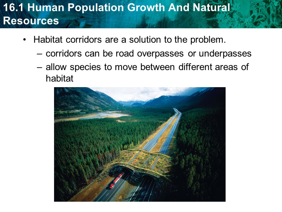 Habitat corridors are a solution to the problem.