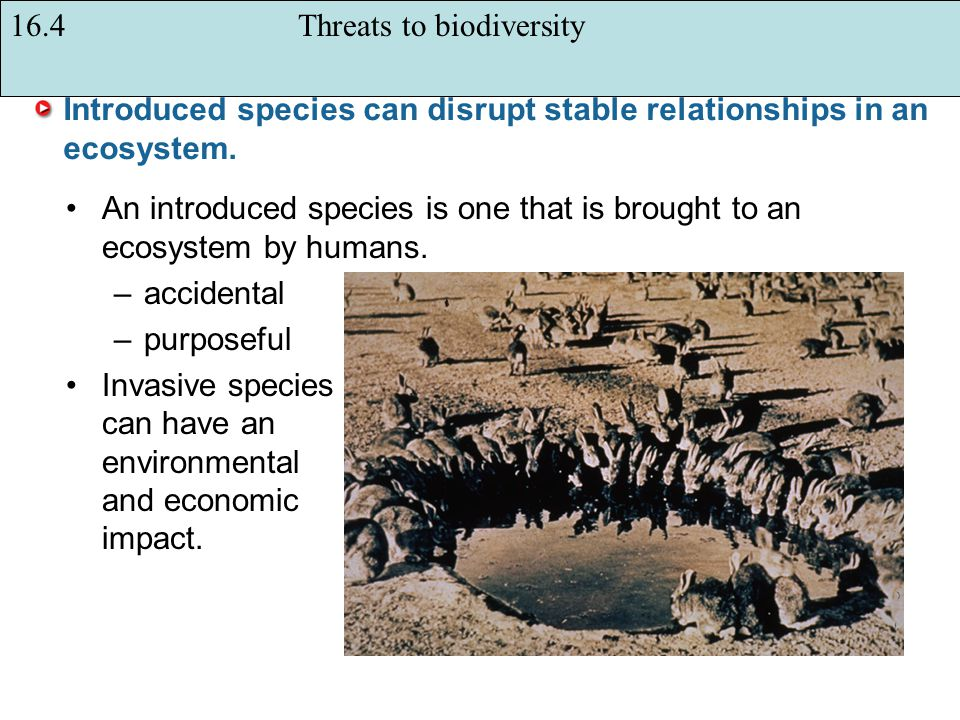 Introduced species can disrupt stable relationships in an ecosystem.