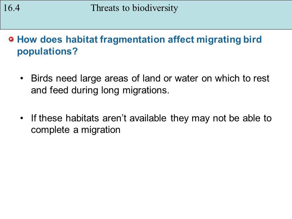How does habitat fragmentation affect migrating bird populations