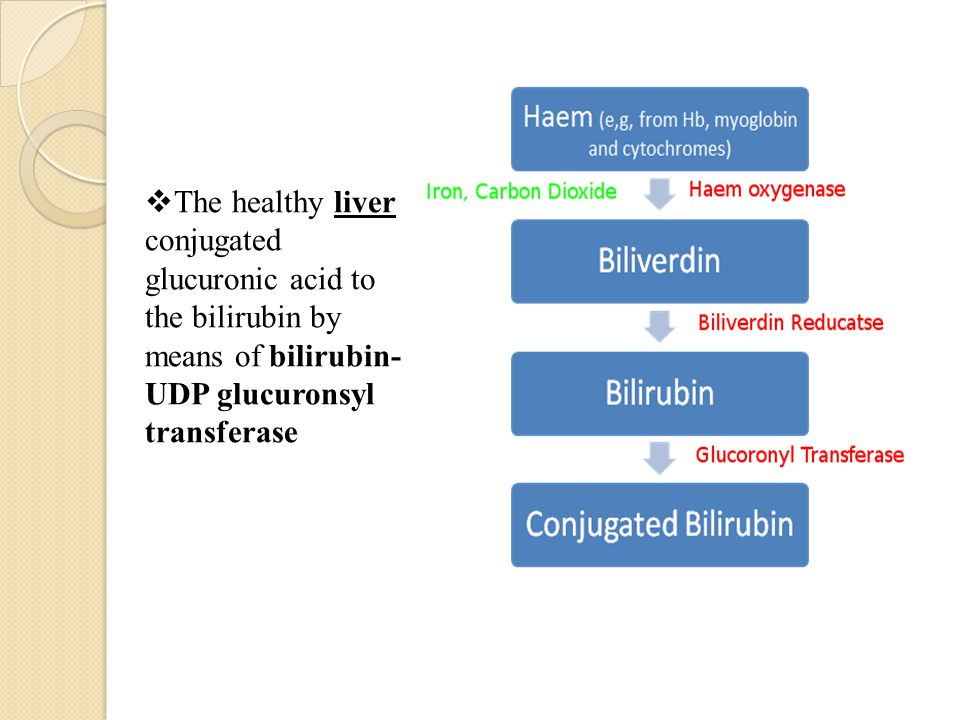 The healthy liver conjugated glucuronic acid to the bilirubin by means of bilirubin-UDP glucuronsyl transferase