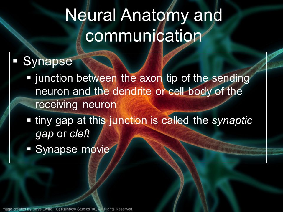 Neural Anatomy and communication