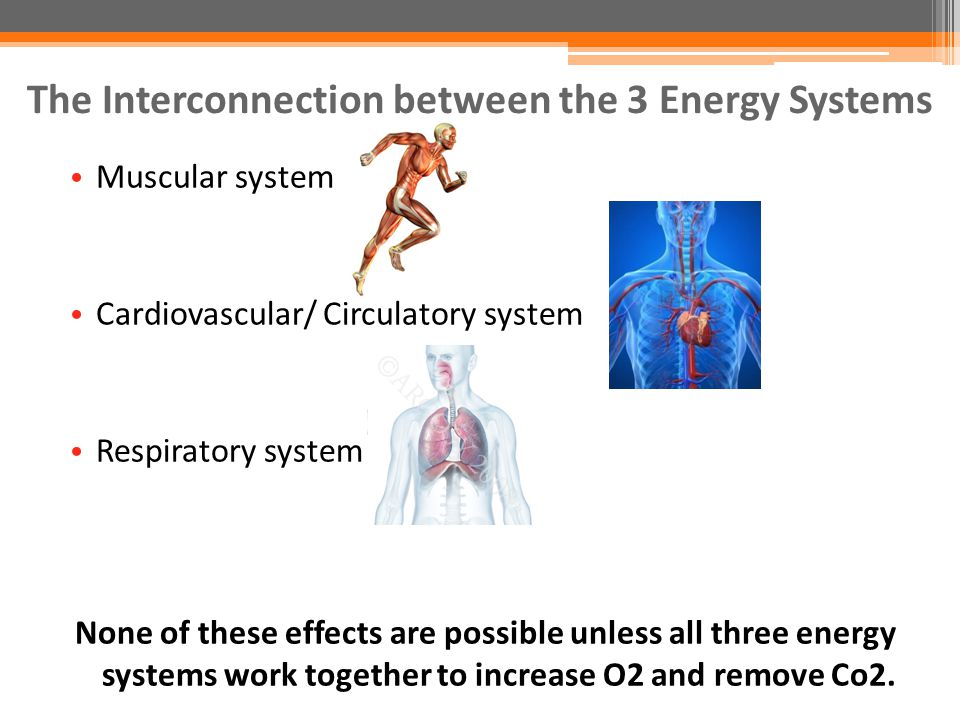 cardio vascular respiratory system working together The cardio-respiratory system and exercise the respiratory and cardiovascular systems work together to deliver oxygen to the cells and to remove carbon dioxide.