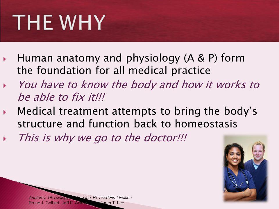 Wunderbar Anatomy And Physiology Terminology Practice Bilder ...
