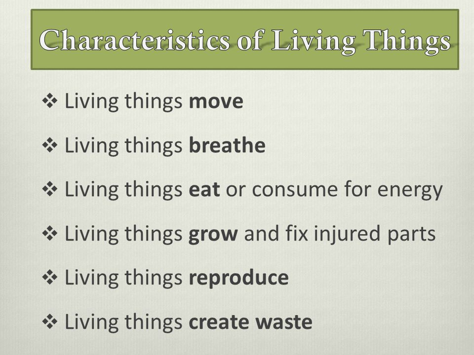 Characteristics Of Living Things on living or nonliving how to tell