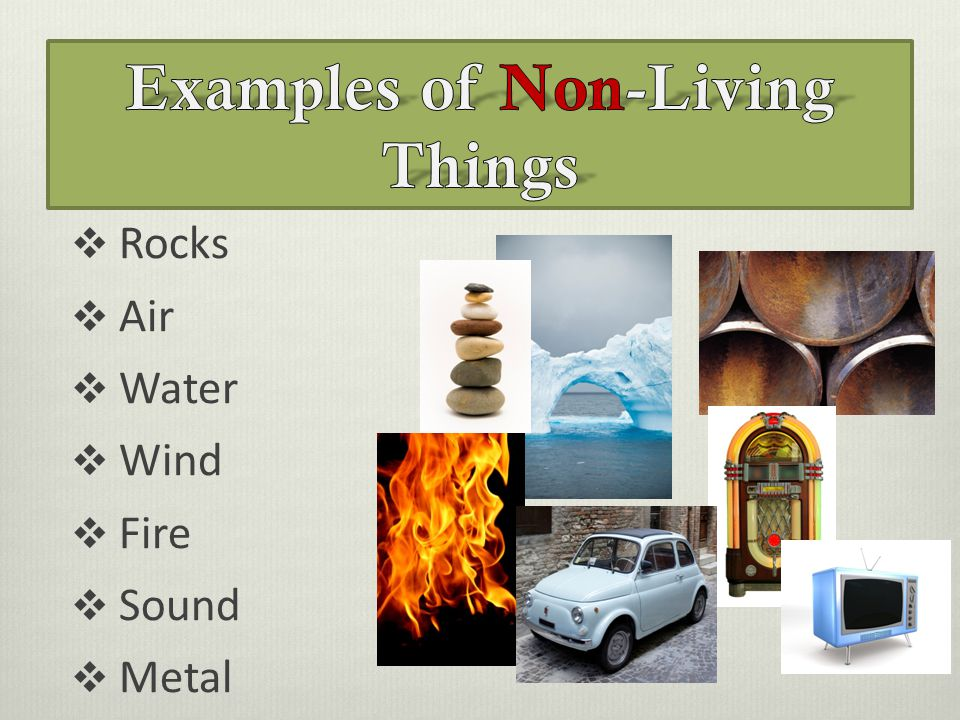 Ex les Of Non Living Things on living or nonliving how to tell