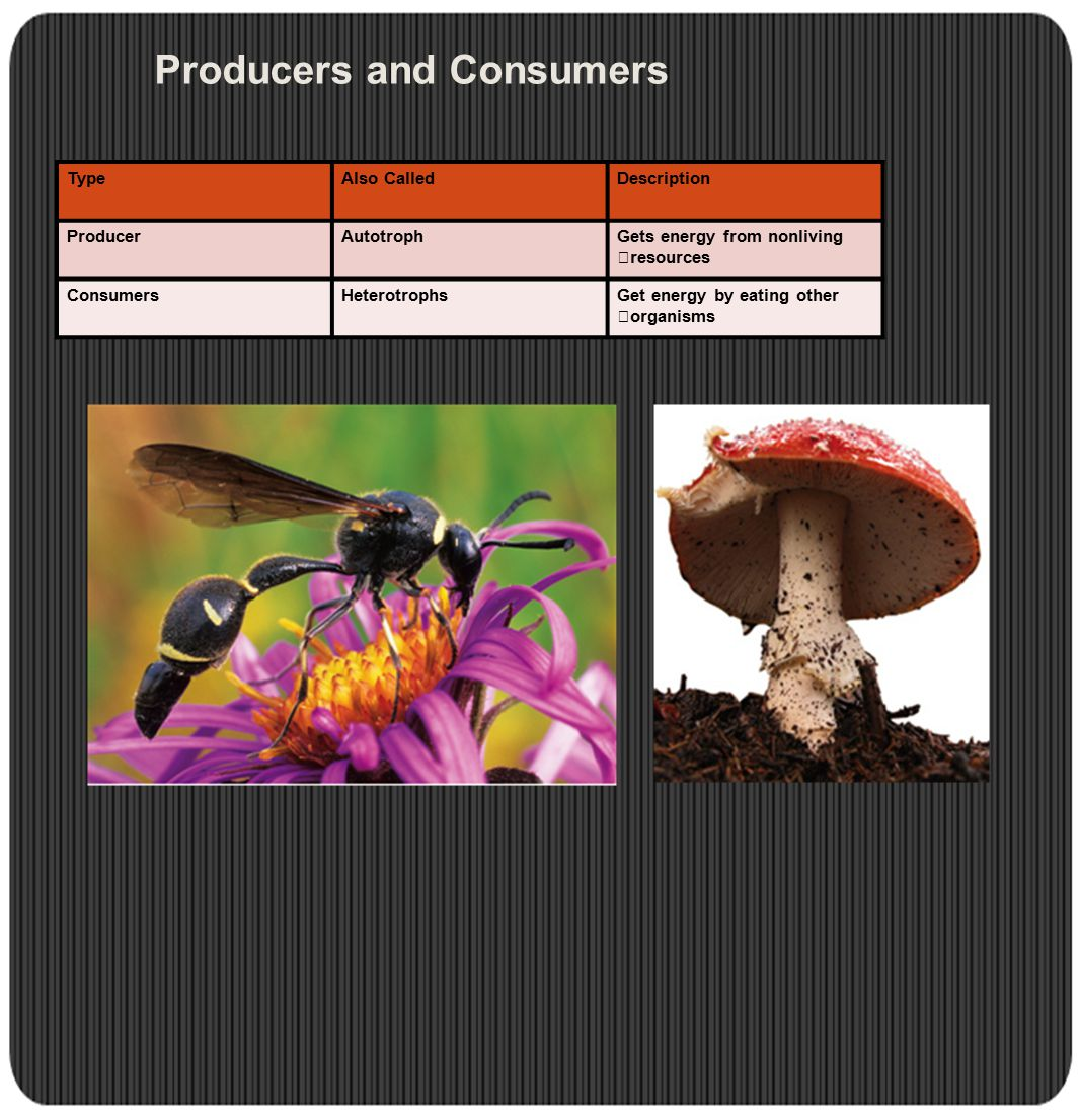 Principles of Ecology Unit ppt video online download