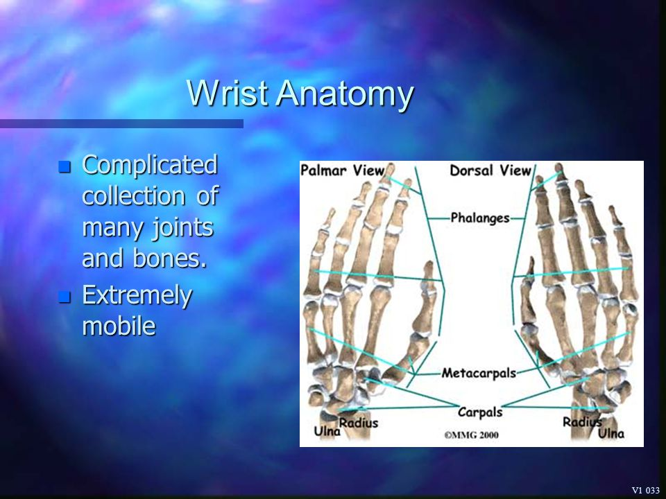 Wrist Anatomy Complicated collection of many joints and bones.