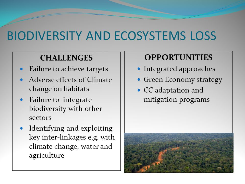 climate change and biodiversity loss pdf