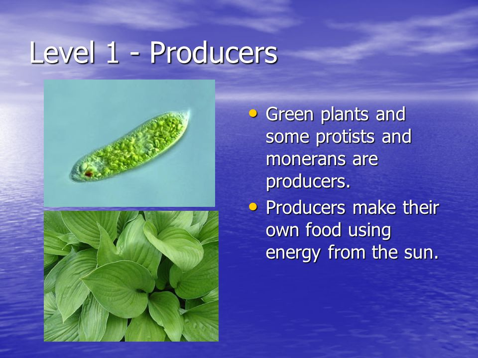 Level 1 - Producers Green plants and some protists and monerans are producers.