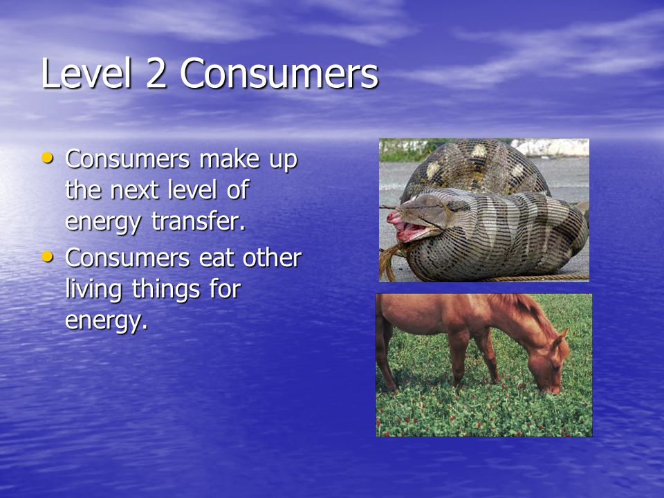 Level 2 Consumers Consumers make up the next level of energy transfer.