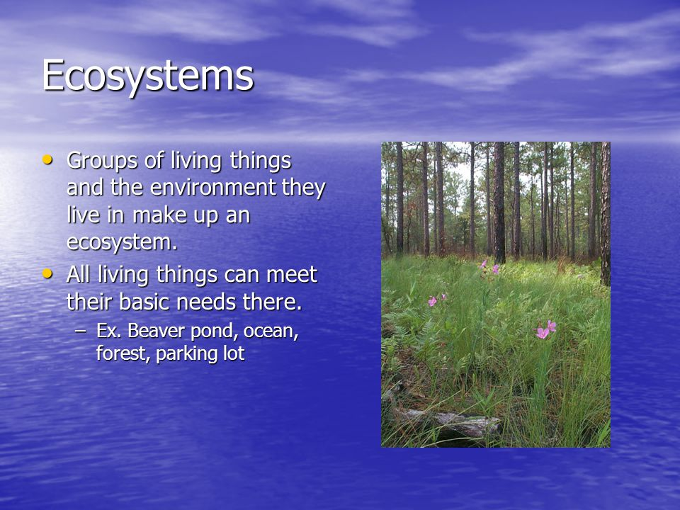 Ecosystems Groups of living things and the environment they live in make up an ecosystem. All living things can meet their basic needs there.