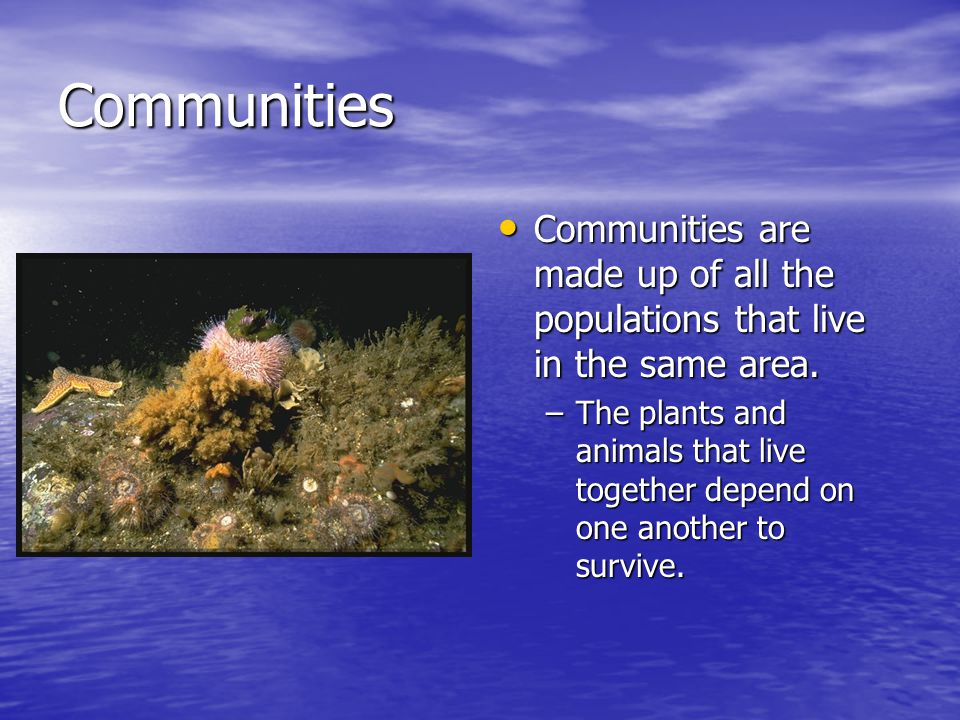 Communities Communities are made up of all the populations that live in the same area.