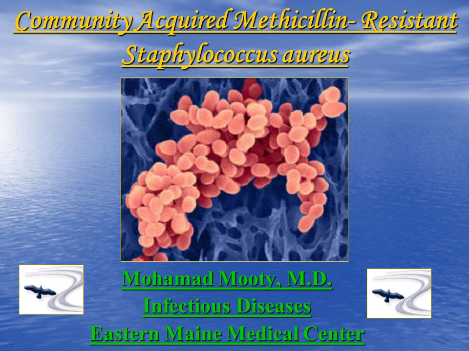 a research on methicillin resistant staphylococcus aureus mrsa This information explains methicillin resistant staphylococcus aureus (mrsa) and how to prevent the infection from spreading.