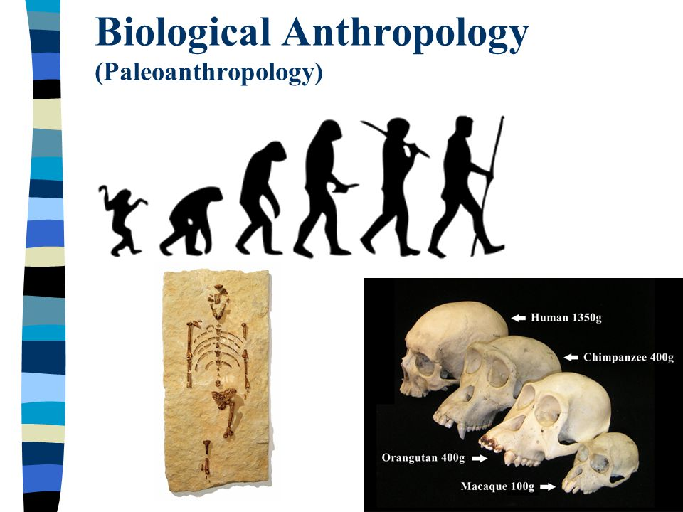 biological anthropology 525 old main university of arkansas fayetteville, arkansas 72701 479-575-4801 fulbright@uarkedu fulbright college careers.