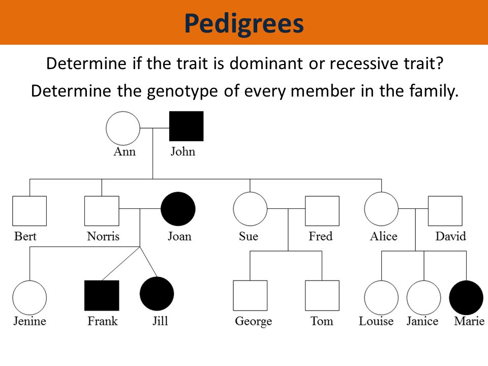 Pedigrees Determine if the trait is dominant or recessive trait.