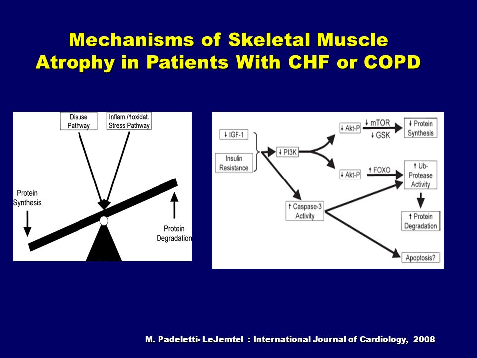 M. Padeletti- LeJemtel : International Journal of Cardiology, 2008