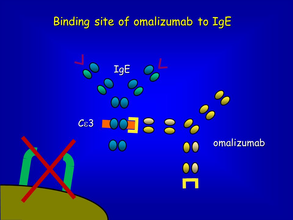 Binding site of omalizumab to IgE