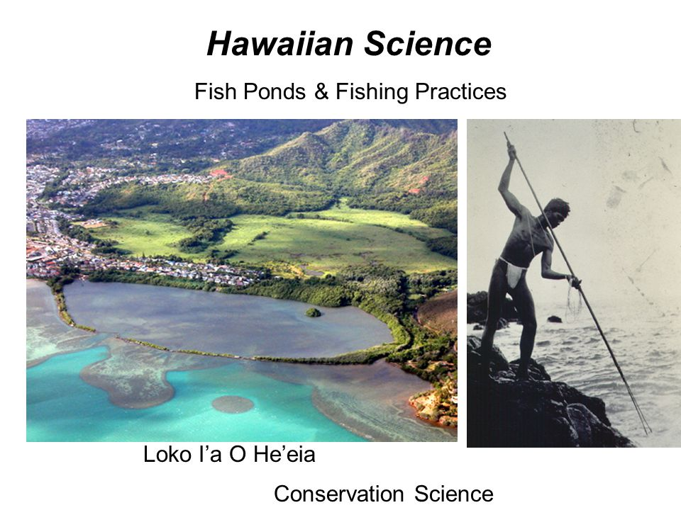 What is science bio ppt download for Hawaiian moon fish