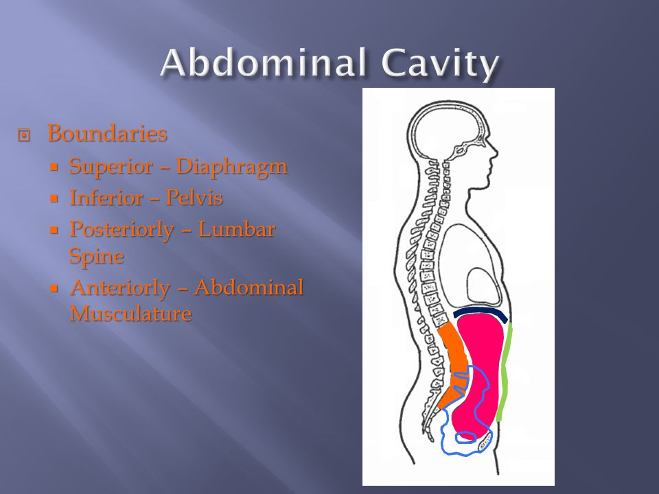 Abdominal, Thorax, and Throat Injuries - ppt download