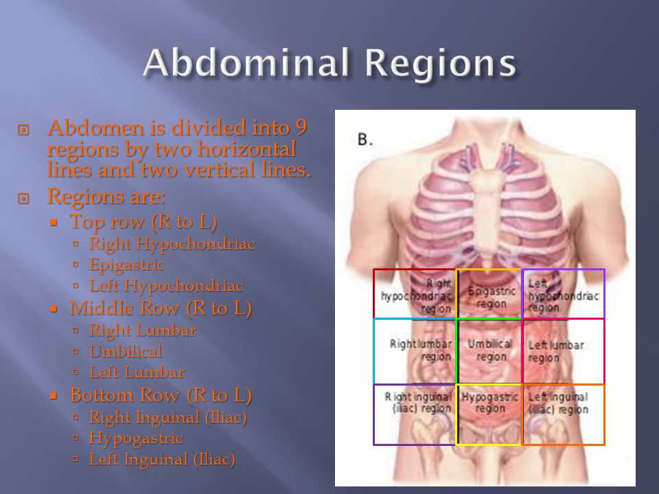 9 regions of abdomen Webmd's abdomen anatomy page provides a detailed image and definition of the abdomen learn about its function, parts, abdominal conditions, and more.
