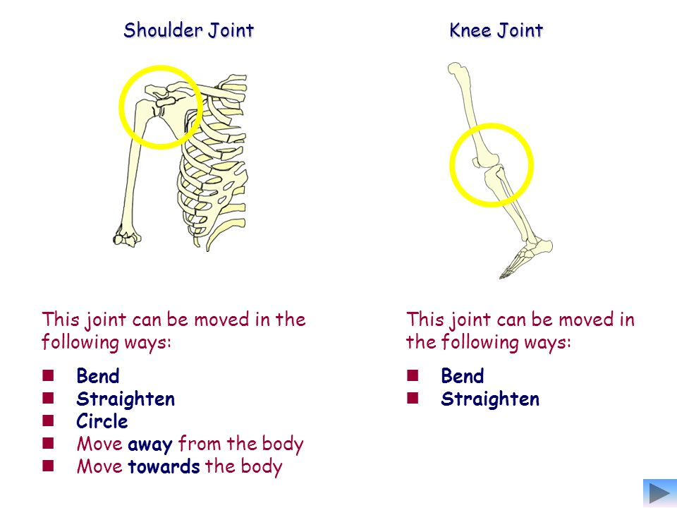 Shoulder Joint Knee Joint. This joint can be moved in the following ways: Bend. Straighten. Circle.