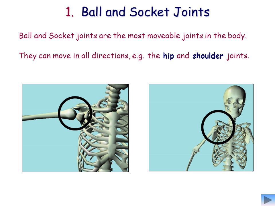 They can move in all directions, e.g. the hip and shoulder joints.