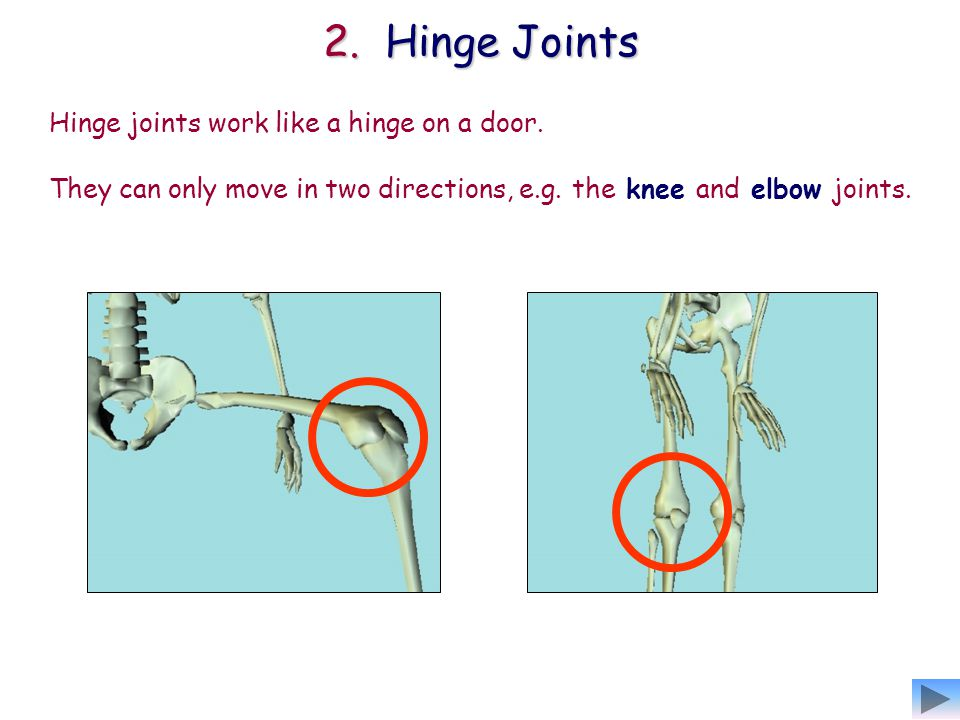 They can only move in two directions, e.g. the knee and elbow joints.