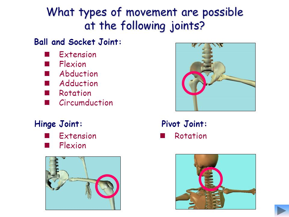 What types of movement are possible at the following joints