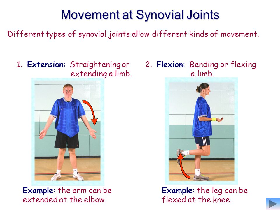 Movement at Synovial Joints
