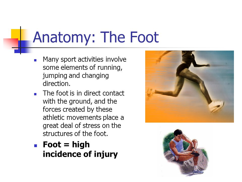 Anatomy: The Foot Foot = high incidence of injury